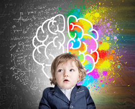 Building the toddler brain